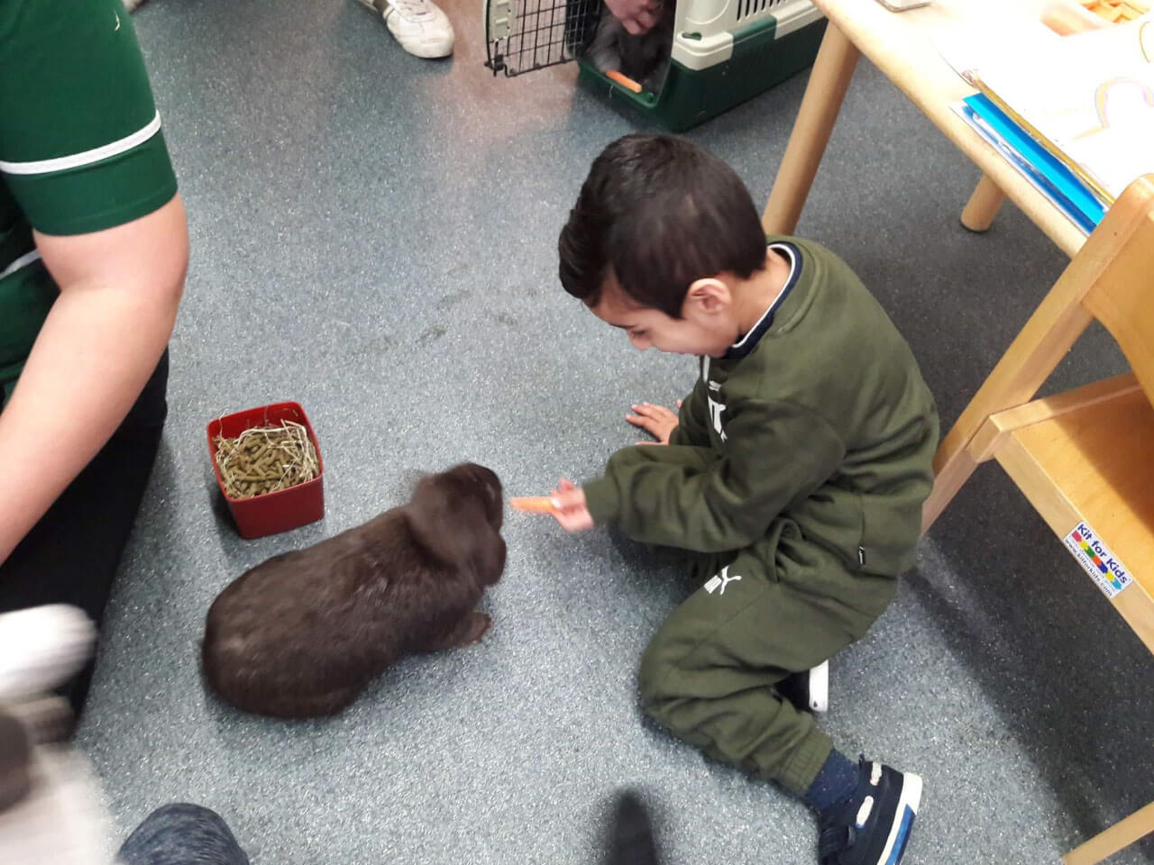 Young child feeding rabbit